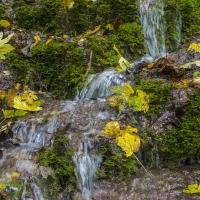 Herbstliche Fotoexkursion / Foto: Albert Klöckler