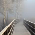Nebel_am_Federseesteg