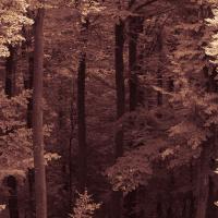 Herbstausflug Blaubeuren - Heidi Halder