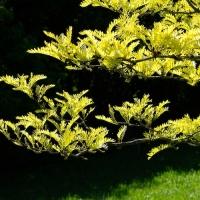 Botanischer Garten 2019 - Bernd Hillerich