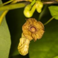 Botanischer Garten 2019 - Frank Gramlich