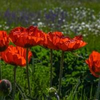 Botanischer Garten 2019 - Heinz Gerhard Ott