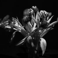 Max-Lindner_50mm_03