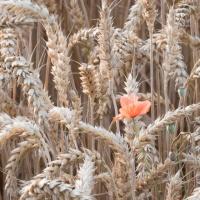 12-310_Landwirtschaft_01