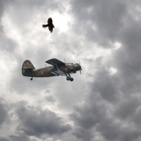 Falke vs Flugzeug / Jochen Dressler