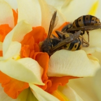 Honigtopf / Karin Garcia