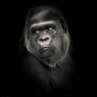 """""""Planet of the apes 3"""" / LAFO 2018 - Dirk Zimmermann (Serie - Annahme)"""