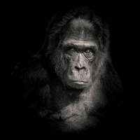 """""""Planet of the apes 5"""" / LAFO 2018 - Dirk Zimmermann (Serie - Annahme)"""