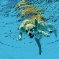 """""""Hund""""  / Lafo 2018 - Manfred Weiner (Annahme)"""