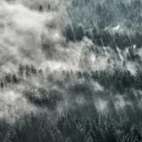 """Nebelwald"" / Lafo 2019 - Armin Appel (Annahme)"