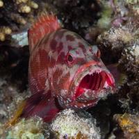 Unterwasserfotografie - Manfred Weiner
