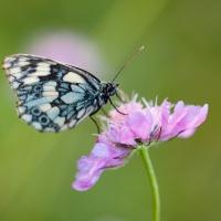 Schmetterling02