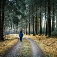 Waldspaziergang / Peter Jansen