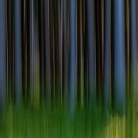 Waldimpression  / Peter Jansen