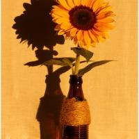 Sonnenblume / Peter Jansen