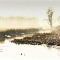 Winter im Federsee / Peter Jansen