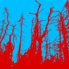Toter Wald, farblich bearbeitet