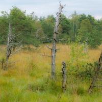 Natur und Kultur - Vereinsausflug 2015 / Foto Klaus Holstein
