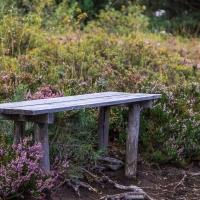 Natur und Kultur - Vereinsausflug 2015 / Foto Petra Gertitschke