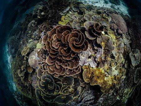 Unterwasserlandschaft in der Fischeye-Perspektive