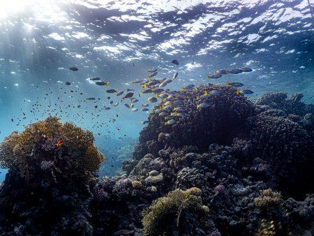 Unterwasserberge